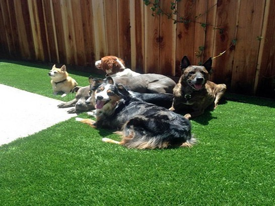 Artificial Grass Photos: Artificial Grass Carpet Pukalani, Hawaii Dogs, Backyard Makeover