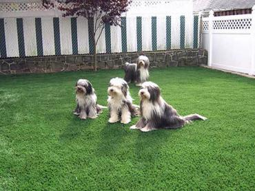Artificial Grass Photos: Plastic Grass Royal Kunia, Hawaii Grass For Dogs, Dogs Runs