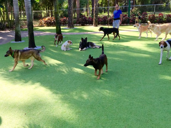 Artificial Grass Photos: Synthetic Grass Lawa'i, Hawaii Dog Grass,  Dog Kennels