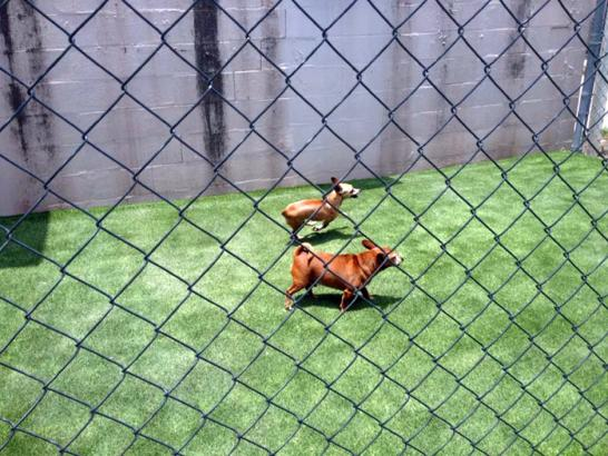 Artificial Grass Photos: Synthetic Turf Supplier Pupukea, Hawaii Pictures Of Dogs